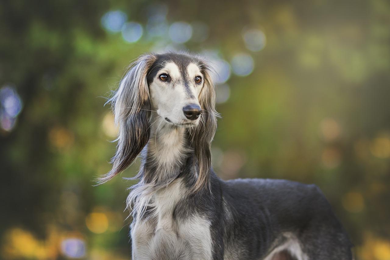 Jak napisać ogłoszenie o zaginięciu psa?