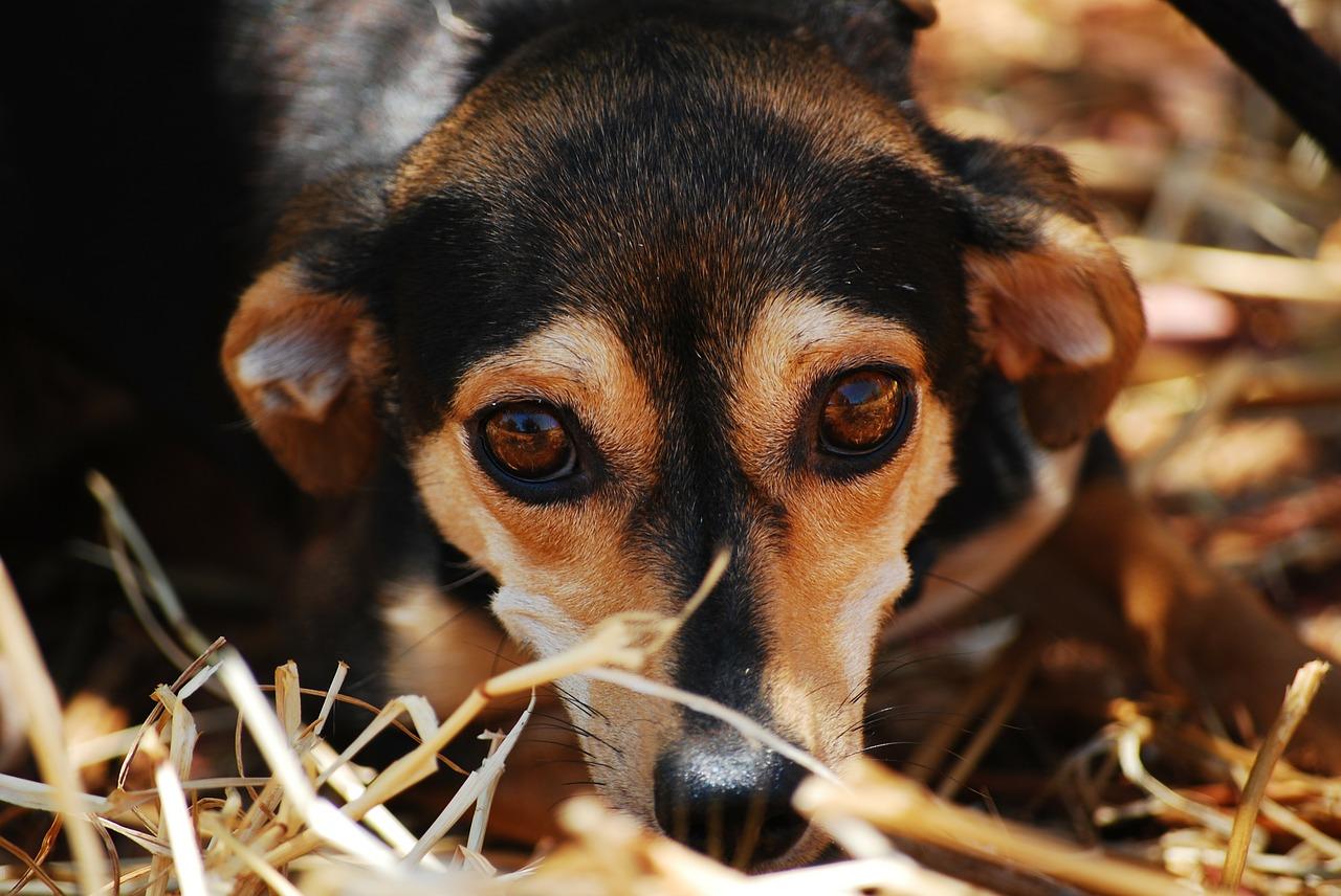 Pies ze schroniska